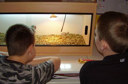 Tortoise viewing