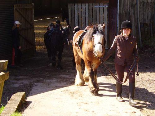 Pony girl web