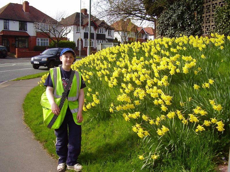 Doffodil bank web copy