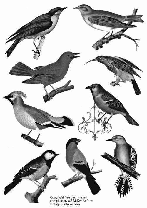 Vintageprintabledotcom bird large images black and white