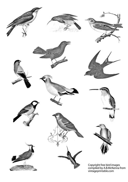 Vintageprintabledotcom bird small images Black & White