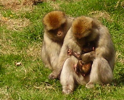 Baby monkey cuddle web