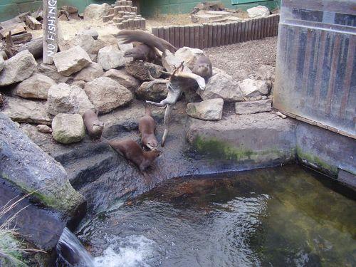Otter pool web