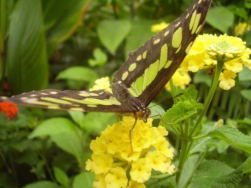 Butterfly web 2
