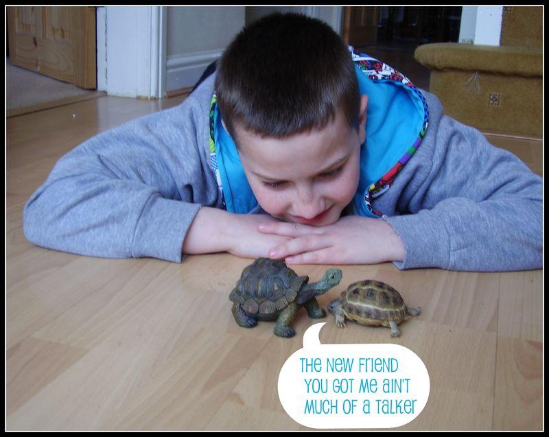 Funny tortoise photo