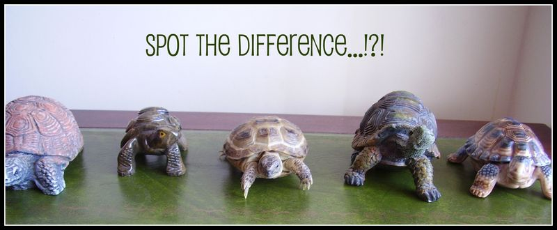 Spot the difference tortoise  funny photo