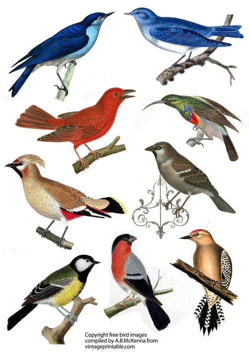 Vintageprintabledotcom bird large images colour