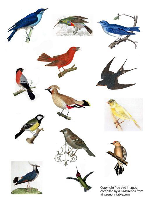 Vintageprintabledotcom bird small images colour
