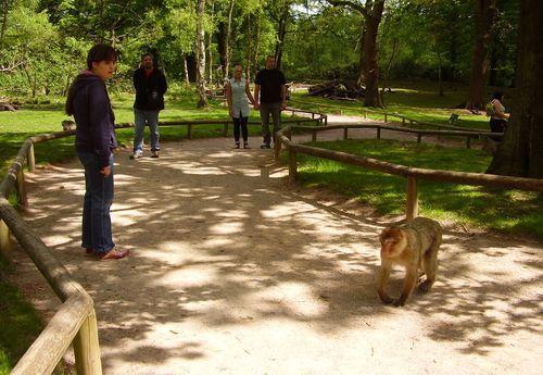 Monkey wandering across our path web