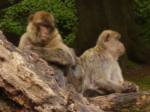 Sleepy monkeys web