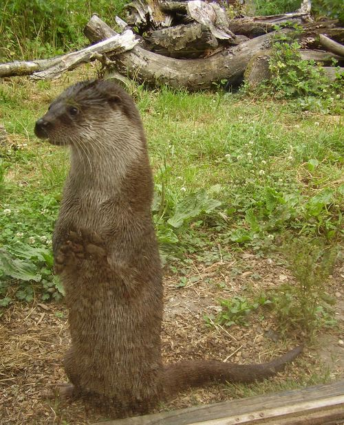 Otter web