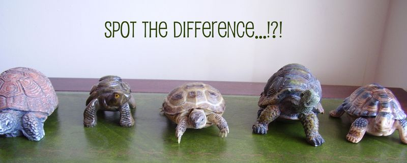 Spot the difference funny photo