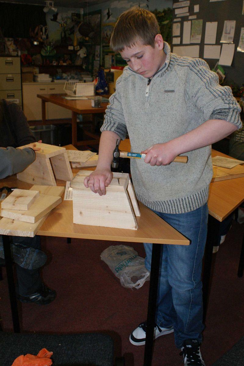 Robin bird box maker 2